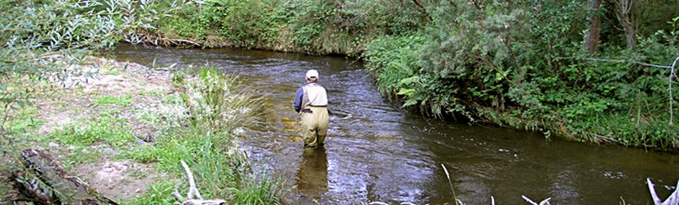 Fish stocking for Stocked trout fishing