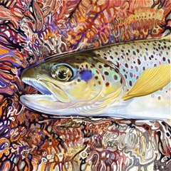 Brown Trout 2