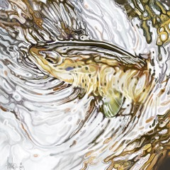 Brown Trout 4